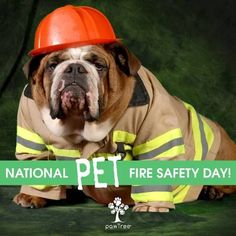 petfiresafety