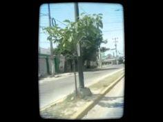 """MOOC Artes y tecnologías para Módulo 6. Correspondencia Audiovisual Título """"Rodando, rodando, rodando"""" Música: Nubes, Grupo Caifanes Mónica de la Cruz  Vivir en Puerto Vallarta, que está en la frontera de los estados de Jalisco y Nayarit en México, no es un paraíso y menos con la crisis económica y con la inundación de turistas. Usé el programa Magisto, que tiene una serie de plantillas y tomé justo la de playa que me servía asi como los efectos. Y los videos son tomados desde mi auto."""