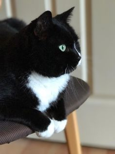 This is my buddy Oreo - he is a good boy. http://ift.tt/2gy9VPh