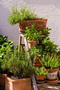 Container Garden: Herbs | jardin d'herbes aromatiques