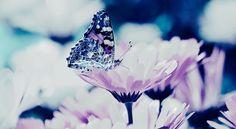 """Aus dieser Geschichte """"Der verkrüppelte Schmetterling"""" kann man sehr viel Mut und Motivation schöpfen. Zwischen den Zeilen steckt sehr viel Weisheit ..."""