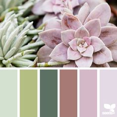 SnapWidget | today's lovely image for { succulent hues } is by @peoniesncream ... thank you, Beatriz ~ i appreciate your sharing yet another gorgeous + inspiring photo in #SeedsColor !