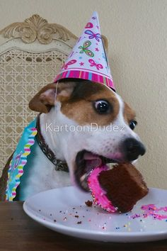 Cede the Jack Russell Terrier and MIniboz mix is celebrating her 7th birthday!