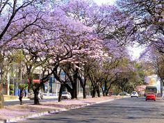 Guatemala City, Avenida Reforma