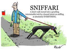 Every walk becomes a sniffari! Greyhound Art, Italian Greyhound, Lévriers Whippet, Funny Dogs, Funny Animals, Dog Jokes, Dog Funnies, Lurcher, Grey Hound Dog