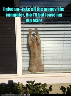 leave the nip!  We'd love to help with your security camera needs: www.a2zsecuritycameras.com
