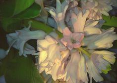 Hyacint.