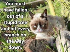 Hahaha wow. I love grumpy cat. So sweet.
