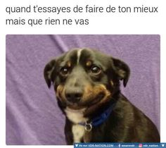For Dog lovers.Here is collection of some Dank memes dogs that are so funny and make you laugh.Just scroll down and keep enjoy these Dank memes dogs.Read This 26 Dank Memes Dogs Memes Humor, Dog Memes, Exams Memes, Exams Funny, News Memes, Animal Memes, Funny Animals, Cute Animals, Baby Animals