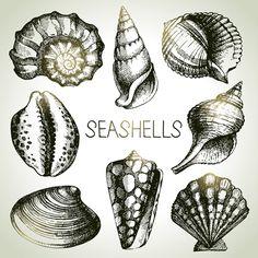Set of seashell hand drawn vectors material 11