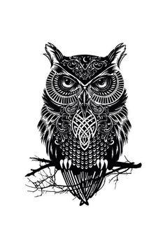photo OWL