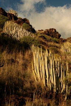 Kanári-szigetek - La Palma - Világutazó Tenerife, Natural Wonders, Madrid, Vineyard, Nature, Outdoor, Las Palmas, Bonito, Outdoors