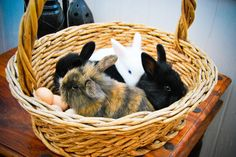 Basket full of bunnies!