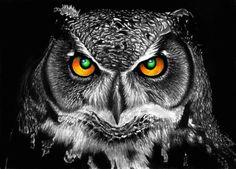 Night Owl by Yankeestyle94 on DeviantArt