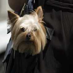 AKC.org offers information on dog breeds, dog ownership, dog training, health, nutrition, exercise & grooming, registering your dog, AKC competition events and affiliated clubs to help you discover more things to enjoy with your dog.