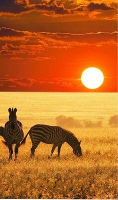 African sunset , African Safari