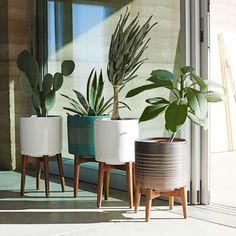 4 plants in cylindrical pots on wooden stands.