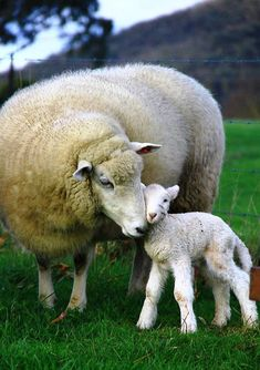 mother and child http://www.pinterest.com/bev418/~sheepish~/