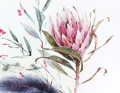 Hydrangea, Tulip, Protea, Orchid Source by kristileekaiser Botanical Art, Botanical Illustration, Watercolor Illustration, Protea Art, Protea Flower, Watercolor Flowers, Watercolor Paintings, Australian Native Flowers, Floral Artwork