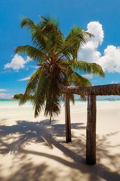 Anse Volbert on Praslin island. A wonderful beach with many palm trees.