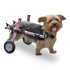 Dog Wheelchair - Pink - For Small Dogs 8-25 lbs - By Walkin' Wheels