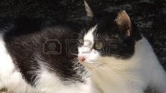 Picture of The leaved cat look for the future. stock photo, images and stock photography. Stock Photos, Future, Cats, Image, Photography, Animals, Future Tense, Gatos, Photograph
