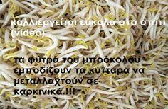 Φύτρα ονομάζουμε τους νεαρούς (ωρών ή ημερών) άσπρους βλαστούς που ξεφυτρώνουν από διάφορους...