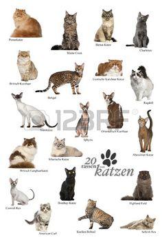 Cat breeds poster in German Stock Photo