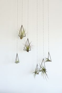Amazing Hanging Air Plants Decor Ideas 86 image is part of Amazing Hanging Air Plants Decor Ideas gallery, you can read and see another amazing image Amazing Hanging Air Plants Decor Ideas on website