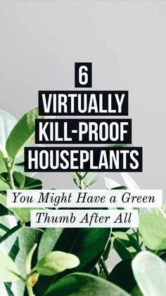 easy house plants DO you always kill your houseplants? Today, I am sharing 6 Virtually Kill-Proof Houseplants that even a habitual plant-killer can keep alive!