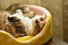 via | photogenic felines