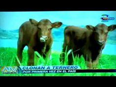 REPORTAJE DE ATV SOBRE PRIMEROS CLONES EN PERU