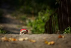 The cat with the red hat - Imgur