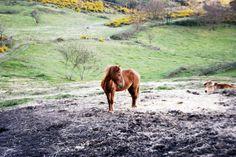 In Riding a horse, we borrow freedom