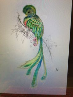 Sketch of Quetzal. I would like to have a tattoo of this bird at some point because it's close to Guatemalan heritage.