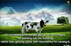 Creationists claim that if you are an evolutionist, this cow with unusual spots will change your stance. Food Ethics, Animals, Change, Cows, Origins, Faith, Science, Journal, Map