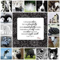 Psalm 119:14 KJV...Black and White Animal Collage w Bible Verse Fearfully and Wonderfully Made
