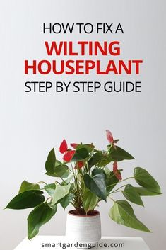 How to fix a wilting houseplant. Step by step guide to fix and prevent wilting in houseplants. There are many causes of wilting in houseplants and it's crucial to work out the problem before trying to fix your plant. This article provides a step by step process to fix any wilting houseplant. Easy Care Indoor Plants, Indoor Flowering Plants, Blooming Plants, Smart Garden, House Plant Care, Garden Guide, Low Lights, Herb Garden, Step Guide