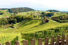 Südsteirische Weinstraße / Ratsch an der Weinstraße. Südsteiermark, Österreich/Austria. Blick in die Weinberge vom Weingut Maitz.