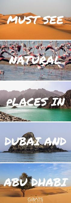 Things To See In Abu Dhabi   What To Do In Dubai   United Arab Emirates Travel   Middle East Travel Itinerary   #dubai #abudhabi #middleeast #uae #uaetravel #bestintravel #travelpros #adventuretravel #traveltips #traveltheworld #middleeastnature #naturalwonders #beautifulplaces #excitingdestinations