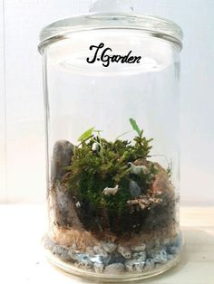 Terrarium/moss terrarium/wartercoin