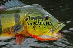 Bass Fishing Tackle, Crappie Fishing, Fly Fishing, Fly Store, Peacock Bass, Black Fly, Tactical Pen, Fishing Videos, Fishing T Shirts