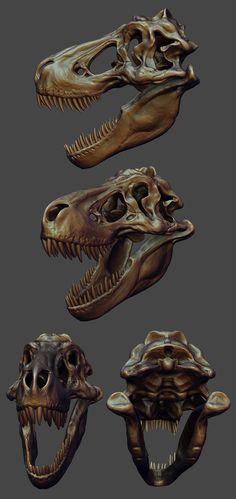 skull study 001.jpg