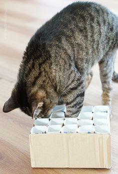 aentschies Blog: Katzenspielzeug Fummelkiste DIY
