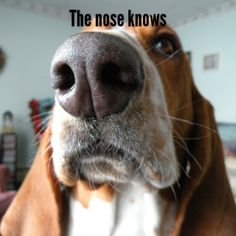 The nose knows.