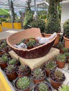 Dein Tontopf ist kaputt geworden? Für deinen Garten, kann er zum richtigen Hingucker werden. Succulents, Instagram, Plants, Pictures, World, Flowers, Garten, Ideas, Flora