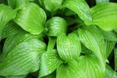 10 Best Plants to Grow in Shady Areas With Dry Soil