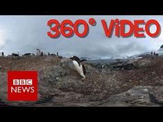 Antarctic Penguins (360 video) - BBC News - YouTube. *Browser motion not cardboard