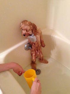 10 собак, принимающих ванну, или С легким паром, дорогие друзья! | Короткие Истории Длинной Таксы