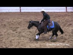 http://www.cowhorsetv.com   http://www.toddbergen.com  Leading reining and cow horse trainer, Todd Bergen, talks about his progression from reining into the reined cow horse world.